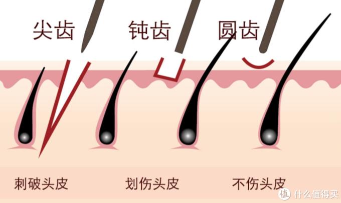 尖齿、钝齿、圆齿示意图
